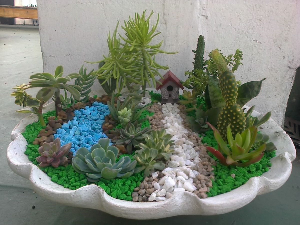Cactus 7 ideas originales y divertidas para decorar - Jardin de cactus ...