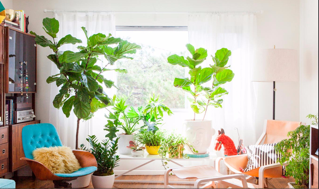 Plantas 10 ideas para decorar tu casa en el 2018 for Ideas para decorar tu casa con plantas