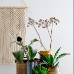 PLANTAS -10 IDEAS PARA DECORAR TU CASA